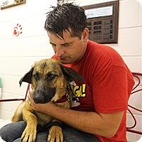 Adopt A Pet :: Bunny - Elyria, OH