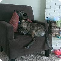 Adopt A Pet :: Montana - Cleveland, OH