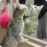 Adopt A Pet :: Mystic - Fairfax, VA