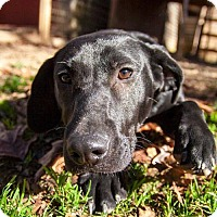 Adopt A Pet :: Izzy - Rockville, MD