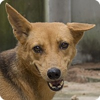 Adopt A Pet :: Tori - Pickering, ON