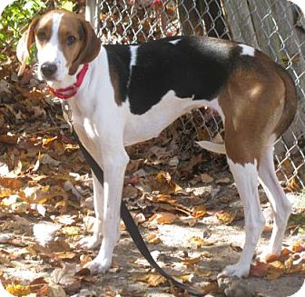 Hound (Unknown Type) Mix Dog for adoption in Voorhees, New Jersey - Wendy