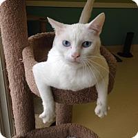 Adopt A Pet :: White Rain - Newburgh, IN