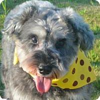 Adopt A Pet :: Alisa - San Ramon, CA