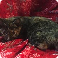 Adopt A Pet :: Daisy Mae - Butner, NC