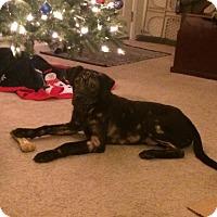 Adopt A Pet :: Walter- Pending Adoption - Lancaster, PA