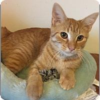 Adopt A Pet :: Alexandra - Toledo, OH