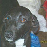 Adopt A Pet :: Socks - Mexia, TX