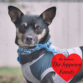 Chihuahua/Dachshund Mix Dog for adoption in San Leon, Texas - Oscar