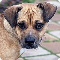 Adopt A Pet :: Cristy - Berkeley, CA