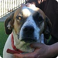 Adopt A Pet :: Jenny - white settlment, TX