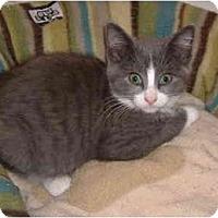 Adopt A Pet :: Lynn - Colmar, PA