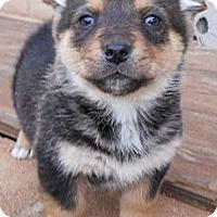 Adopt A Pet :: Louise - dewey, AZ