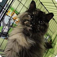 Adopt A Pet :: Shodu - Byron Center, MI