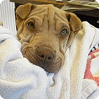 Adopt A Pet :: Mannie Moe - Wickenburg, AZ
