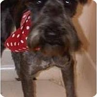 Adopt A Pet :: Langston - Arlington, TX