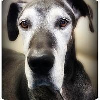 Adopt A Pet :: Samson - Pascagoula, MS