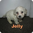 Adopt A Pet :: Jelly
