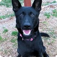 Adopt A Pet :: Samantha - in Maine - kennebunkport, ME