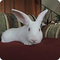 Adopt A Pet :: Sadie - Conshohocken, PA