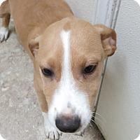 Adopt A Pet :: Heidi - Clear Lake, IA