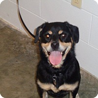 Adopt A Pet :: Toby - St. Cloud, FL