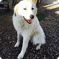 Adopt A Pet :: Frida - Garland, TX