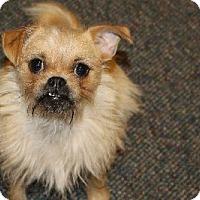 Adopt A Pet :: Grace - Avon, NY
