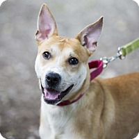 Adopt A Pet :: Ryder - Kettering, OH
