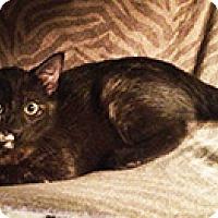 Adopt A Pet :: Sabrina - Metairie, LA