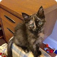 Adopt A Pet :: Rory - Duluth, GA