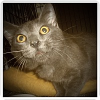 Adopt A Pet :: BRIGGS - Medford, WI