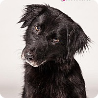 Adopt A Pet :: Jasmine - White Hall, AR