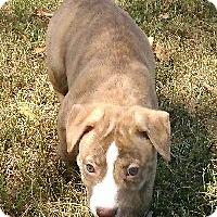 Adopt A Pet :: Tarzan - Waller, TX