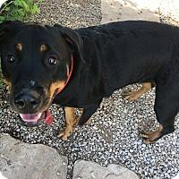 Adopt A Pet :: Mary Jane - Gilbert, AZ