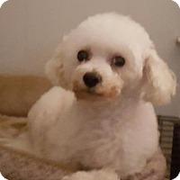 Adopt A Pet :: Presley - Cary, NC