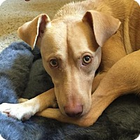 Adopt A Pet :: Carson - PENDING - Grafton, WI