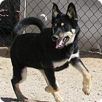 Adopt A Pet :: Clyde - San Tan Valley, AZ