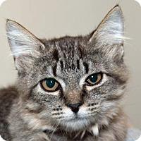 Adopt A Pet :: Saturn - Prescott, AZ