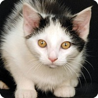 Adopt A Pet :: Hurley - Newland, NC