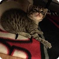 Adopt A Pet :: Shiloh - Abbeville, LA