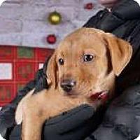 Adopt A Pet :: Mike - Sudbury, MA