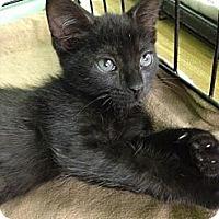 Adopt A Pet :: Lois - Jackson, MS