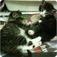 Adopt A Pet :: Noodles - New Egypt, NJ