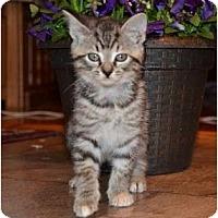 Adopt A Pet :: Sammy - Troy, OH