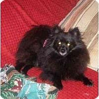 Adopt A Pet :: Bukie - Houston, TX
