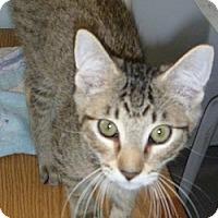 Adopt A Pet :: Billy - Hamburg, NY