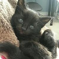 Adopt A Pet :: Soloman - North Highlands, CA
