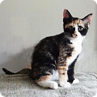 Adopt A Pet :: Lyssi - N. Billerica, MA