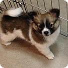 Adopt A Pet :: Roger